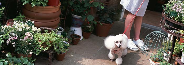 犬の社会化と犬のしつけ