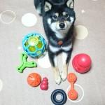 福と知育玩具