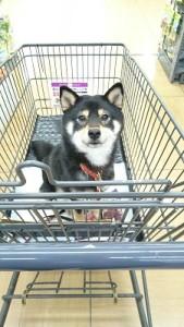 犬用カート