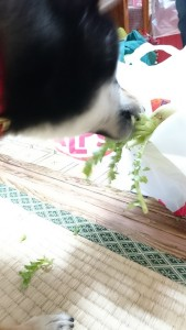 大根食べる