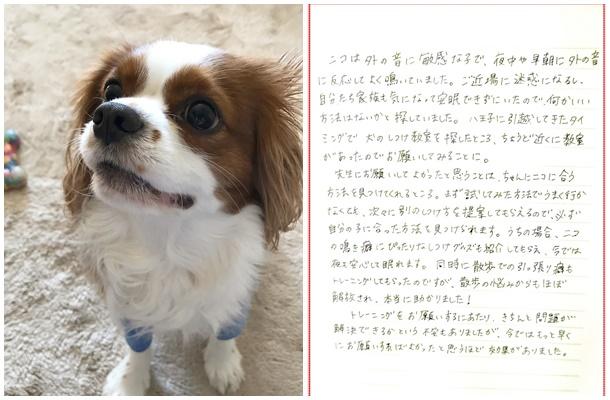 ニコちゃん(キャバリア)