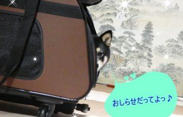 5/11お知らせ
