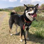 2018.4.12 狂犬病注射