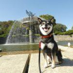 2018.10.22 昭和記念公園 噴水