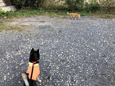 2018.11.6 猫対福