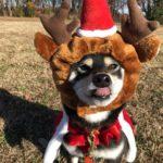 2018.12.24 クリスマス