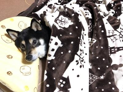 2018.12.26 毛布にくるまる