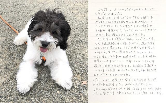 コロンちゃん(コッカプー)