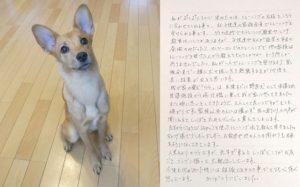 ららちゃん(雑種)