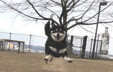 2019.1.31 飛行犬