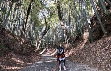 2019.3.18 滝山公園