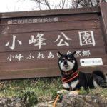 2019.4.1 小峰公園