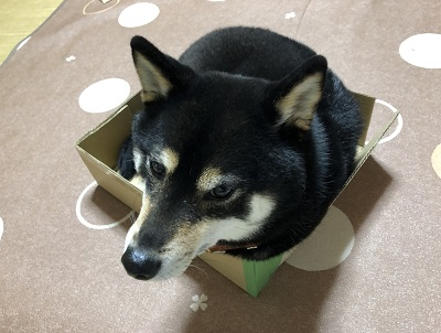 2019.4.4 箱入り息子