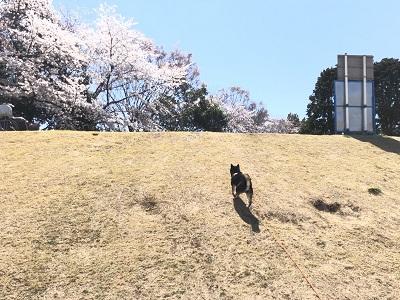2019.4.4 いい天気