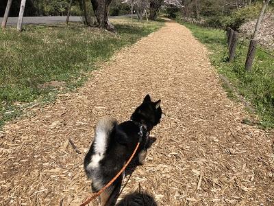 2019.4.7 春のお散歩