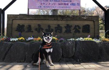 2019.4.7 小山内裏公園