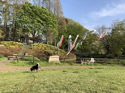2019.4.20 鯉のぼりよりニオイ嗅ぎ