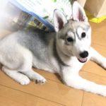 2019.7.18 レッスン生もみじちゃん