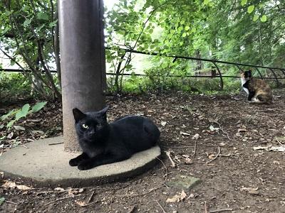 2019.8.19 3匹の猫