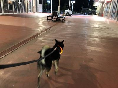 2019.8.8 夜散歩