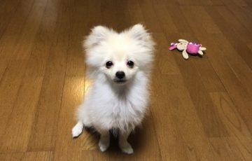 2019.8.30 レッスン生ハチ君