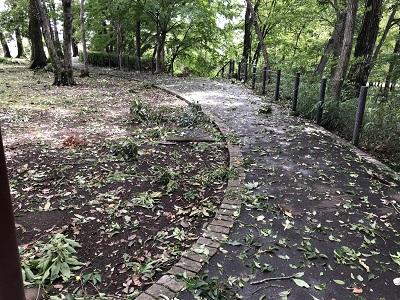 2019.9.9 公園荒れる