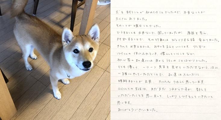 ルイ君 (柴犬)