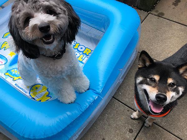 犬の幼稚園での犬の遊び