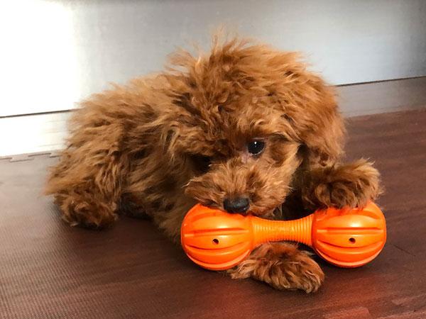 犬の知育玩具