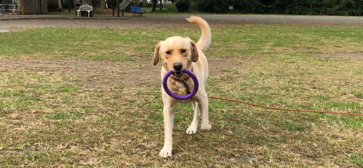 遊びながら学ぶ ドッグトレーニング