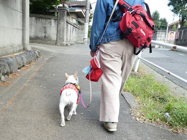 飼い主さんとお散歩練習