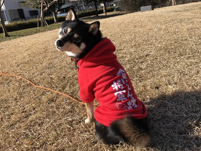 2019.12.18 PuKuPuKuの犬の幼稚園とは