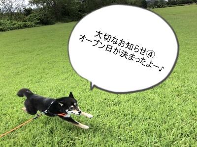 2019.12.13 犬の幼稚園オープン日