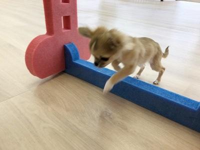 2020.1.24 犬の幼稚園