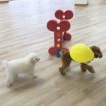 2020.1.27 犬の幼稚園