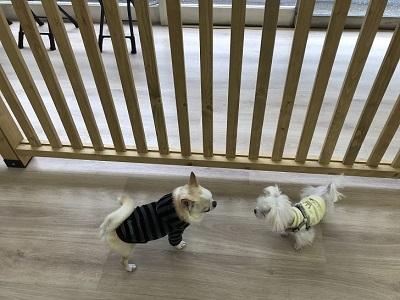 2020.1.8 犬の幼稚園の様子