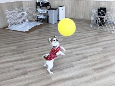 2020.1.20 犬の幼稚園