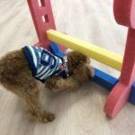 2020.1.22 犬の幼稚園