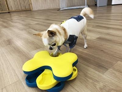 2020.2.7 犬の幼稚園 パズル