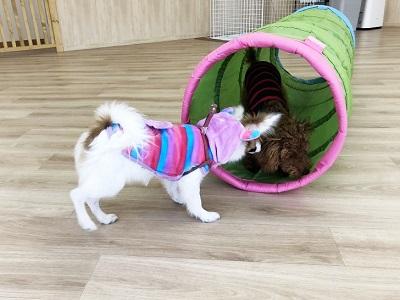 2020.2.7 犬の幼稚園 トンネル込み合い中