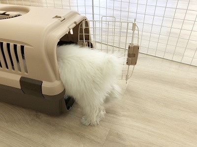 2020.2.10 犬の幼稚園 クレート練習