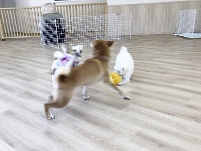 2020.2.10 犬の幼稚園 大運動会