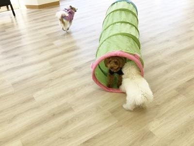 2020.2.10 犬の幼稚園 トンネル込み合ってる