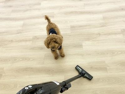 2020.2.10 犬の幼稚園 掃除機の練習