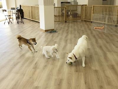 2020.2.19 犬の幼稚園 ボール投げ