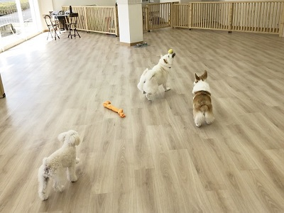 2020.2.19 犬の幼稚園 おもちゃ遊び