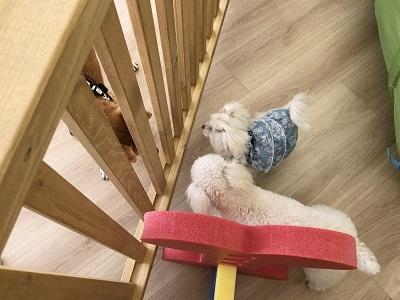 2020.2.19 犬の幼稚園 柵越しにご挨拶