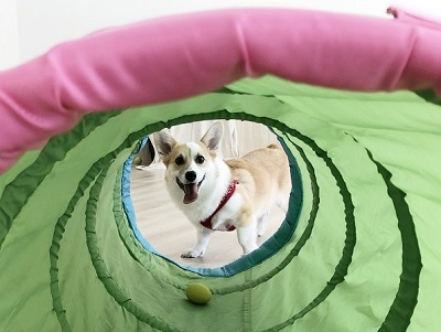 2020.2.19 犬の幼稚園 トンネル