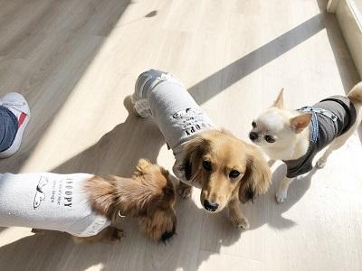 2020.2.21 犬の幼稚園 お友達