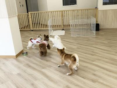 2020.2.3 犬の幼稚園